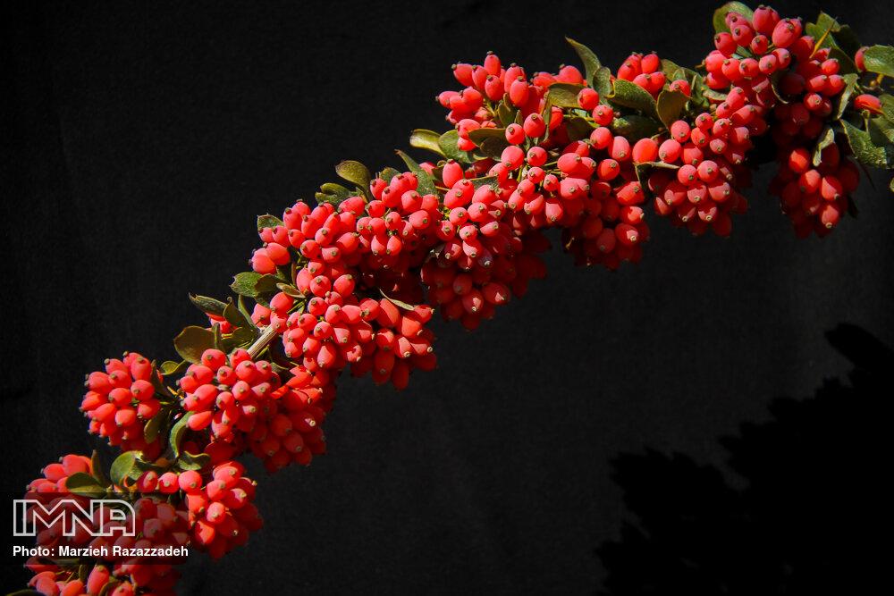 Red Iranian Jewels