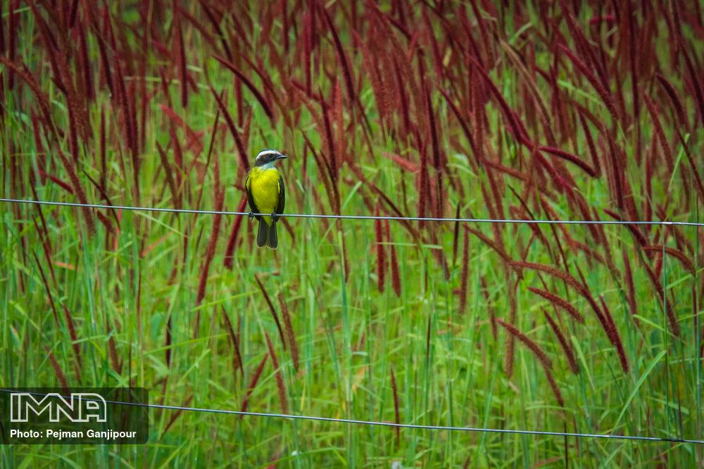 طبیعت ماتوگروسو برزیل