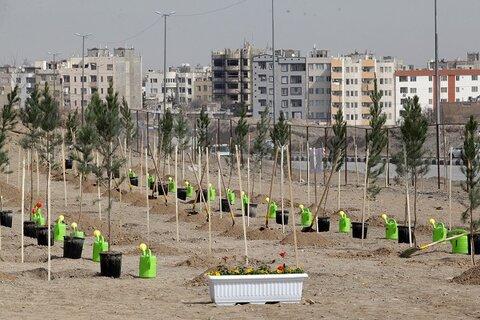 کاشت ۷۰۰ اصله درخت و درختچه در پارک نسترن یزد