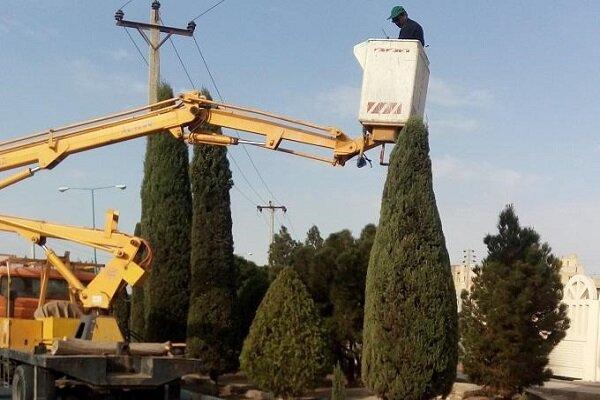 اجرای عملیات هرس فرمدهی درختان سطح شهر