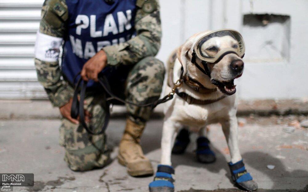 فرودگاههای ایران به سگ موادیاب تجهیز می شود