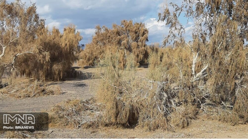 تراژدی مرگ درختان در شهرکرد