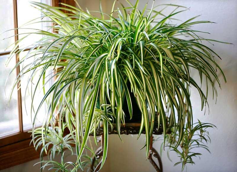 کدام گیاهان به کاهش آلودگی هوا کمک میکنند؟