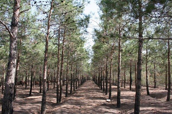 آماربرداری از عرصه جنگل طبیعی شرق/ شناسایی بیش از ۳ هزار درخت خشک و نیمهخشک