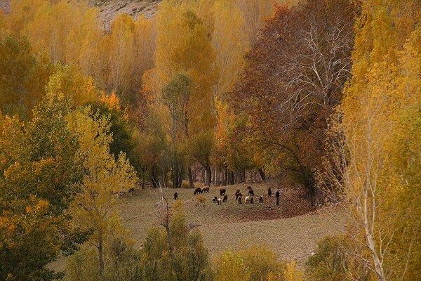 یک متر از باغات تبریز  تغییر کاربری نداده است
