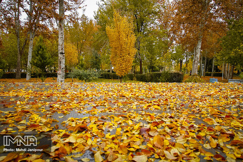 Stunning autumn in Isfahan