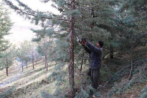 قطع ۲۰۰  درخت در گلپایگان