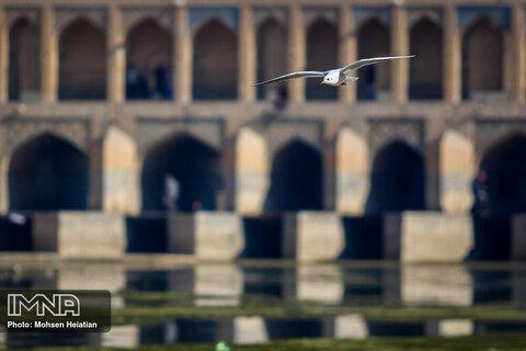 Migratory birds soaring high upon Zayanderud