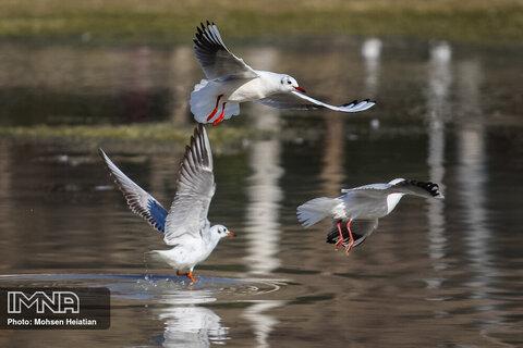 دلیل اصلی مهاجرت پرندگان چیست؟