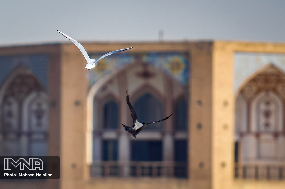 Migratory birds soaring high upon Zayanderud