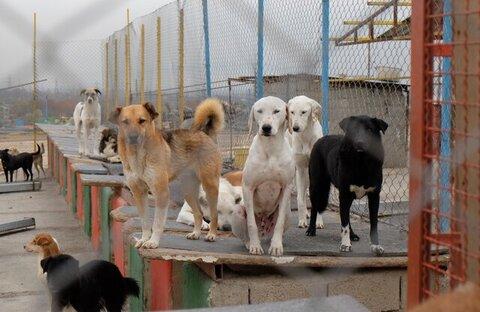 سگهای آستارا صاحب خانه میشوند!