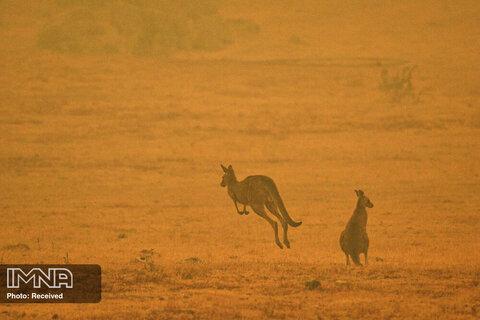 آتش سوزی در استرالیا