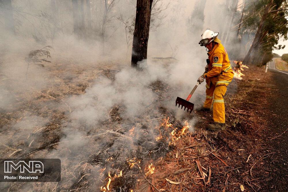 بیش از ۵ هکتار از مزارع و باغات شهرستان سنقروکلیایی طعمه حریق شد