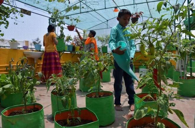 راهکار جالب هند در مواجهه با کاهش زمینهای کشاورزی
