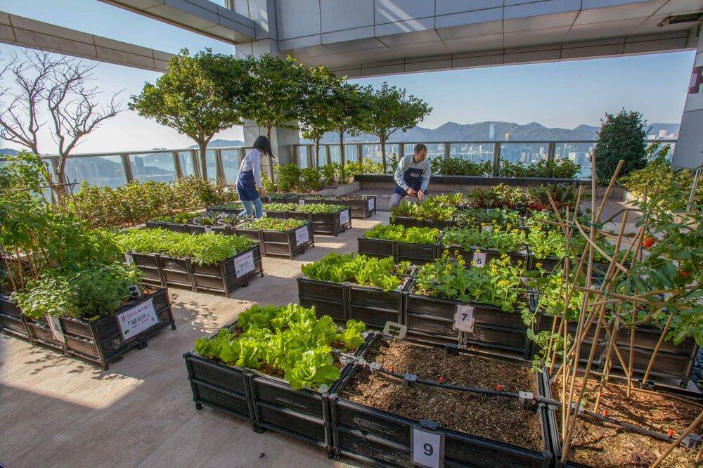 نقش مزارع شهری در حفظ تنوع زیستی