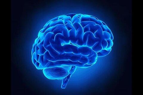 پیوند ژنتیکی بین شکل صورت و مغز کشف شده است