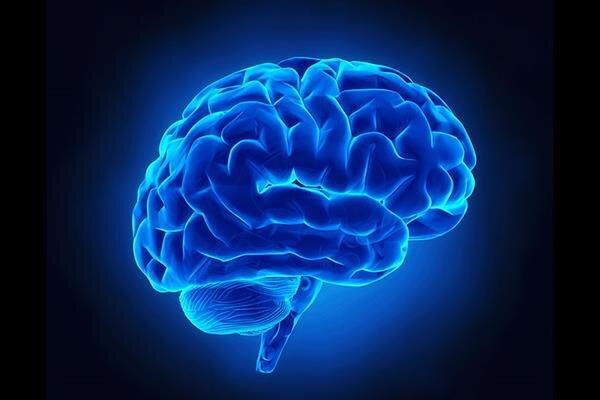 افزایش عملکرد مغز با یادگیری فعالیتهای جدید