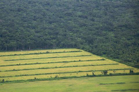 دولت آینده در سیاستگذاریهای توسعه بر مبنای کشاورزی و تخریب جنگلها تجدیدنظر کند
