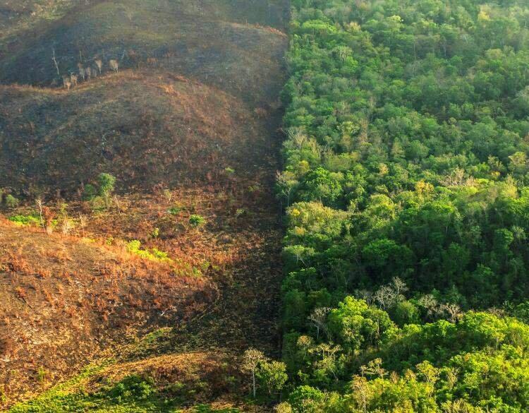 آفریقا؛ قاره جنگلزدای جهان