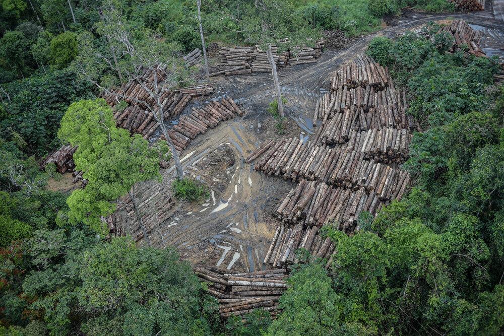 گامهای ساده برای مقابله با جنگلزدایی
