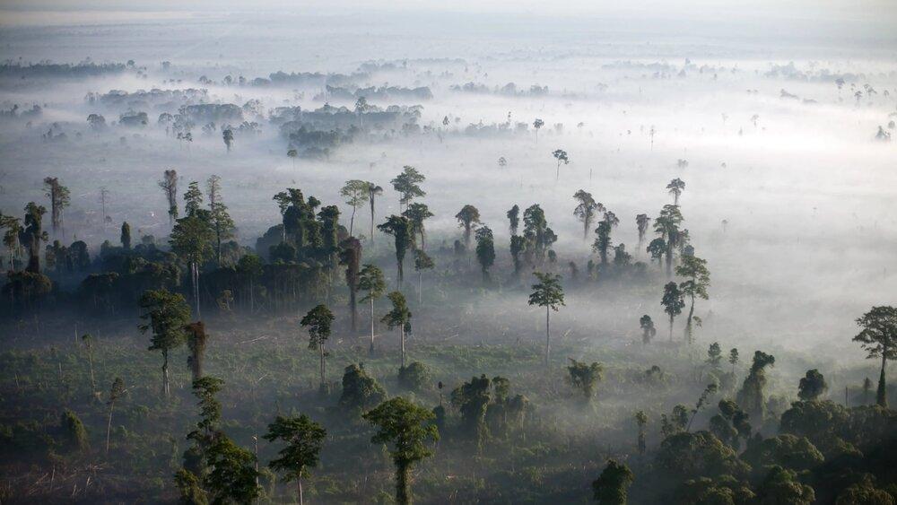 نقش چین در نابودی جنگلهای گرمسیری