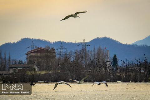 پرندگان تالاب استیل آستارا