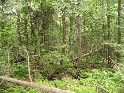 ضرورت تهیه هر چه سریعتر طرح جایگزین جنگل