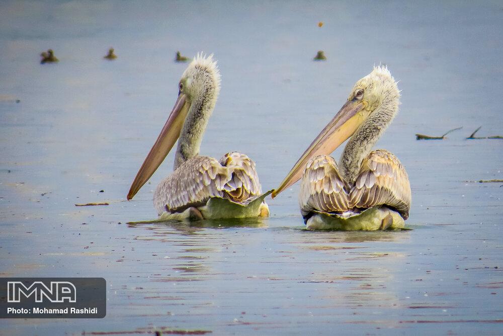 ایجاد ۵۰ دریاچه جدید در بارندگی های اخیر/ هویار به پردیسان رفت