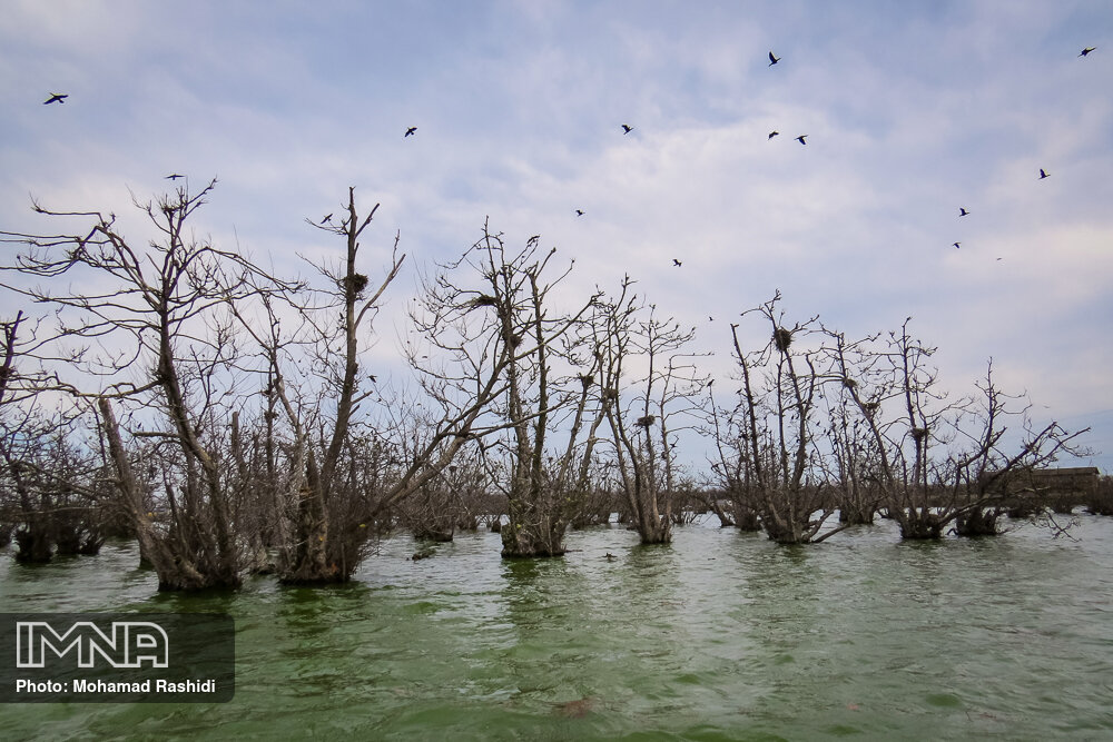 Steel wetland home to migratory birds