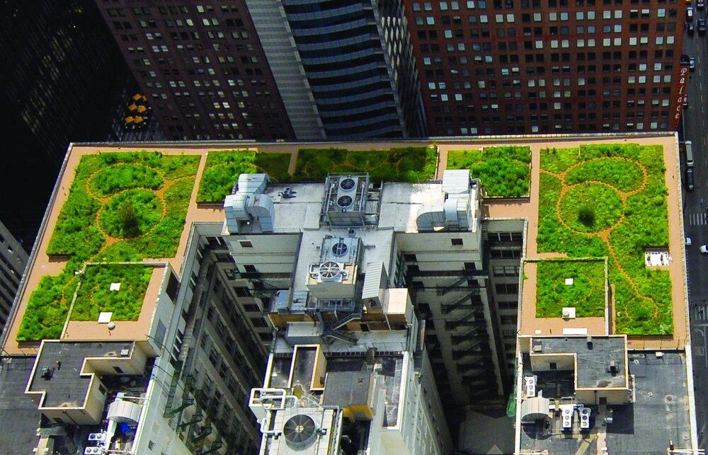 شیکاگو؛ شهر بامهای سبز