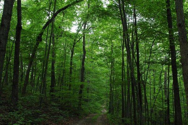 پوشش جنگلهای طبیعی و دستکاشت کشور به ۱۴.۳ میلیون هکتار رسید