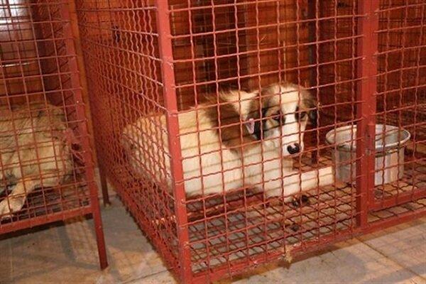 سگهای بیصاحب از  شهر گلپایگان جمع آوری میشوند