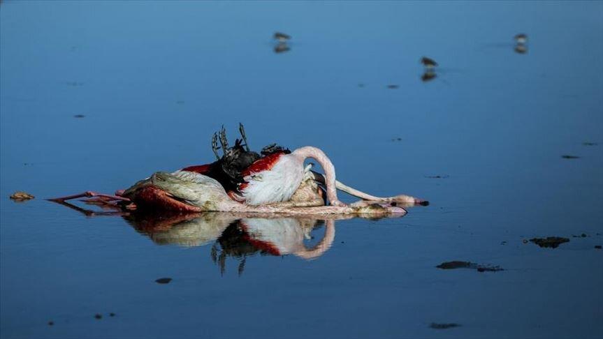 تالاب میانکاله؛ بهشتی که قتلگاه پرندگان مهاجر شد