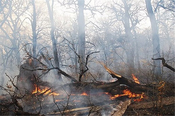 جنگلهای رامسر آتش گرفت