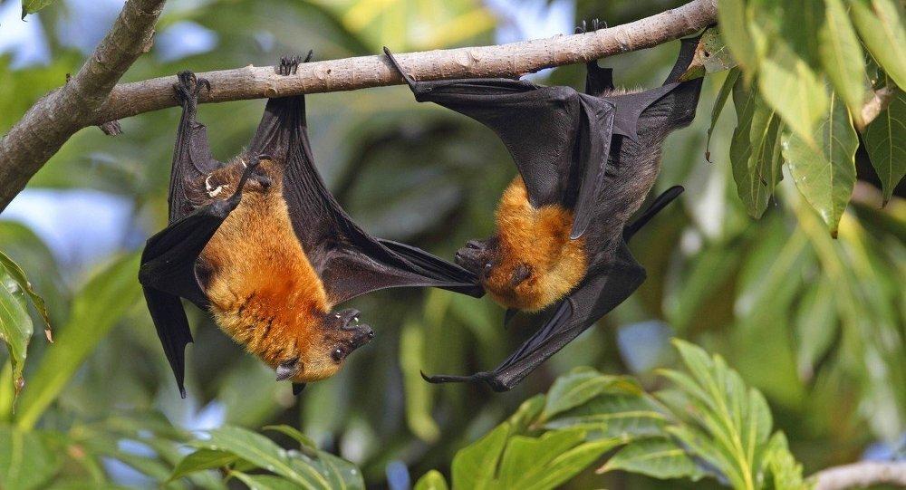 درباره خفاش چه میدانید؟