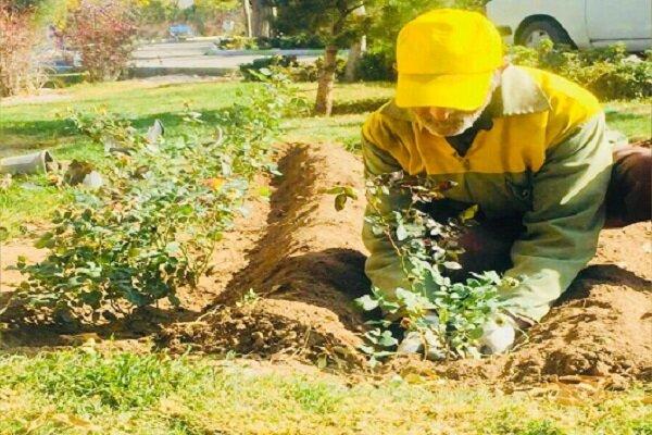 ٢٨٠٠ اصله درخت در نطنز غرس میشود