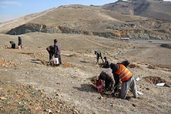 بذر ۳ هزار درخت بادام تلخ در سنندج کاشته شد