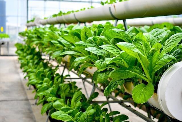 صادرات محصولات کشاورزی ایران به ۴۳ کشور دنیا