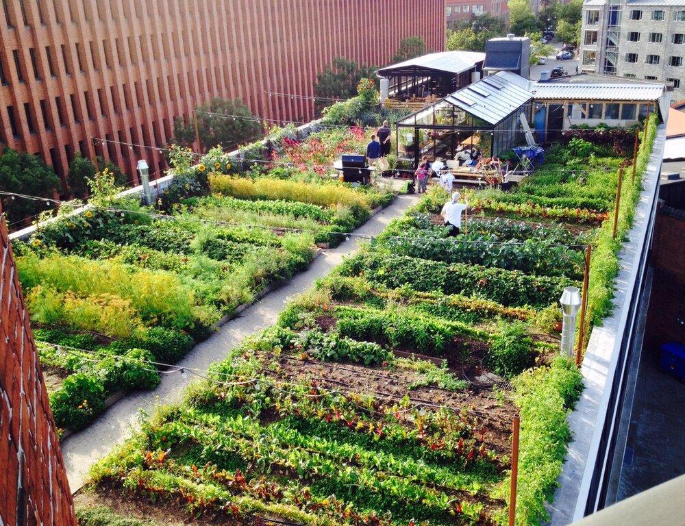 آیندهای پایدار با ترویج مزارع شهری