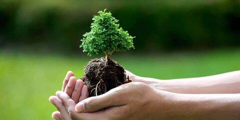 اجرای طرح درختکاری مشهد با پویش «نفس عمیق شهر»