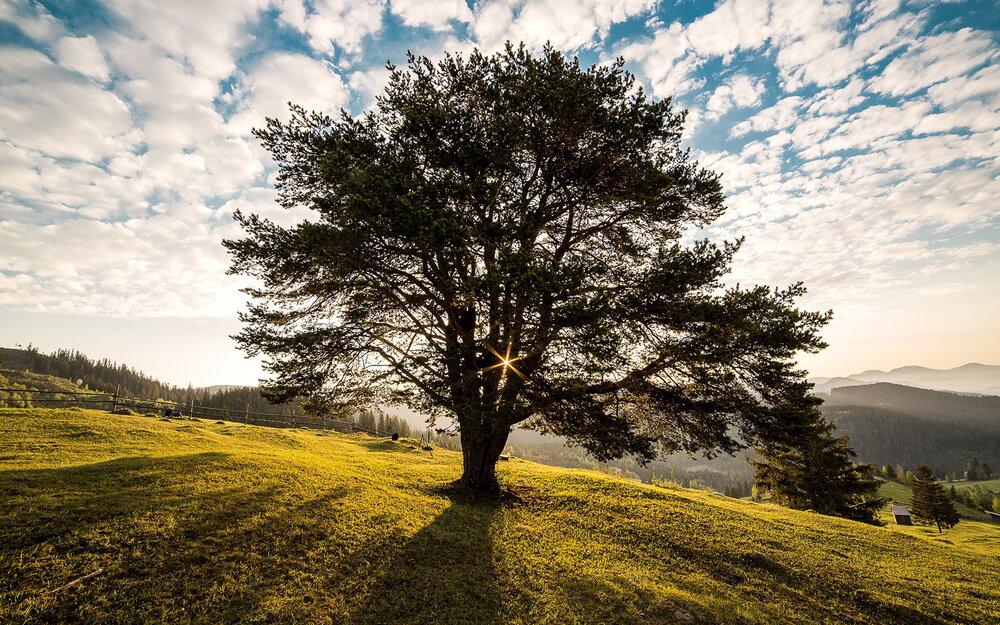 صدور مجوز قطع هزار و ۴۶۶ اصله درخت در مشهد
