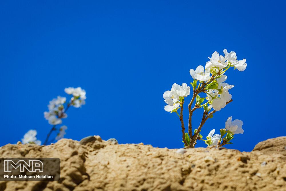 مژده دهید باغ را، بوی بهار میرسد