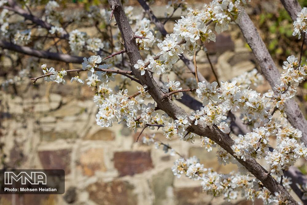 بهار؛ لبخند خدا بر زمین
