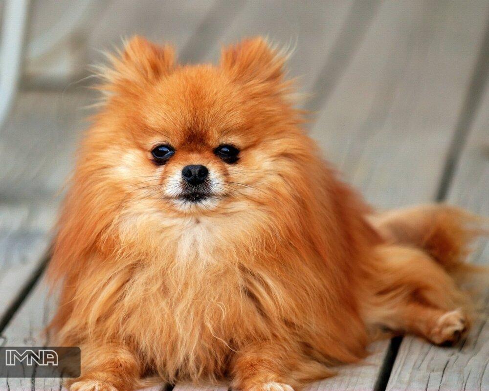 مرگ یک قلاده سگ مبتلا به کووید ۱۹؛ کرونا عامل مرگ حیوان نیست