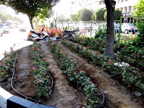 بررسی سازگاری گونههای گیاهی فضای سبز
