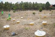 کاشت حدود ۷۰۰ اصله درخت در اکوپارک صدرا