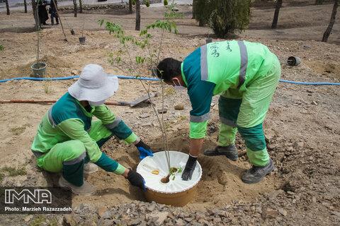 کاشت ۲۰۰ اصله درخت کم نیاز آبی با فناوری گراوسیس در کوه نخودی