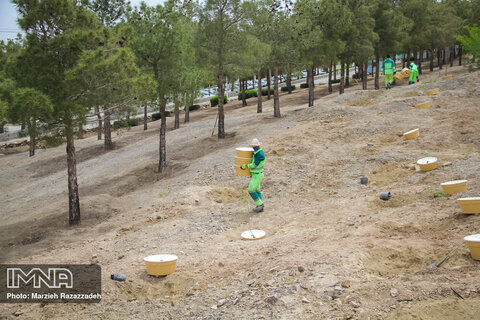 ۵۳ هکتار جنگلکاری در آلودهترین نقطه اصفهان
