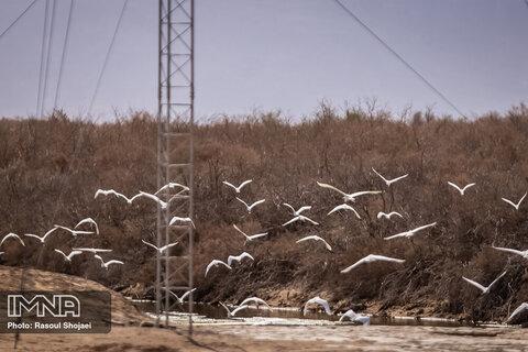 پرندگان تالاب گاوخونی