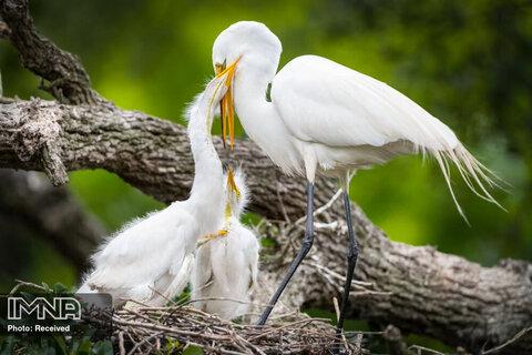 مادری در پادشاهی حیوانات